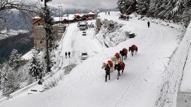 travel agent himachal , Shimla